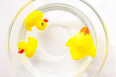 Cute yellow rubber ducks family floating on the water. Parent and teenager communication issues. Naughty baby duckies disobey their mom stock images
