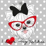 Cute Yorkshire Terrier. On a dots background Stock Photos