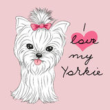Cute Yorkshire Terrier. On a pink background Royalty Free Stock Images
