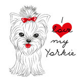 Cute Yorkshire Terrier. On a white background Stock Images