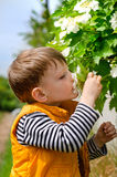 Cute young boy smelling spring blossom Royalty Free Stock Photography
