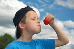 Cute young boy smells or tastes strawberry. A cute little boy tries the smell of the strawberry he picked in countryside strawberry field Stock Photography