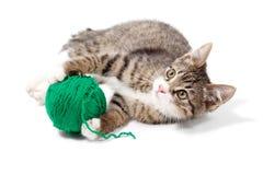 Cute young cat Stock Photos