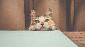 Cute young cat lying down view from a low angle stock photo