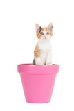 Cute young cat in a pink flower pot stock photos
