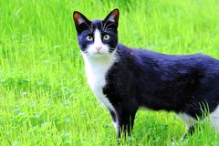 Cute young cat running fun through a green juicy meadow in spring on a Sunny day royalty free stock images