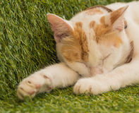 Cute young cat sleeping on green turf, Thailand Stock Images