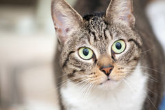 Cute Young Cat Royalty Free Stock Images