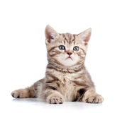 Cute young cat on white background Stock Photos
