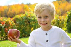 Cute Young Child at Apple Orchard Royalty Free Stock Images