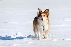 Cute young dog Royalty Free Stock Images