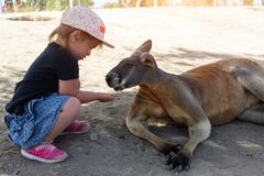 Cute young girl and kangaroo in the zoo in Israel stock image