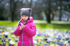 Cute young girl picking crocus flowers on beautiful blooming crocus meadow. On early spring Royalty Free Stock Photo