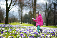 Cute young girl picking crocus flowers on beautiful blooming crocus meadow. On early spring Royalty Free Stock Images