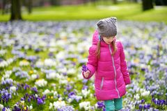 Cute young girl picking crocus flowers on beautiful blooming crocus meadow on early spring. Adorable child having fun outdoors Royalty Free Stock Photography