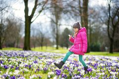 Cute young girl picking crocus flowers on beautiful blooming crocus meadow on early spring. Adorable child having fun outdoors Royalty Free Stock Photos