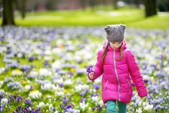 Cute young girl picking crocus flowers on beautiful blooming crocus meadow on early spring. Adorable child having fun outdoors Stock Photo
