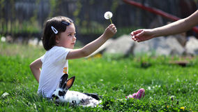 Cute young girl with rabbit sharing dandelion. Young girl sitting on grass with rabbit near her holding and giving a dandelion to someone Stock Image