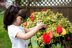 Cute Young Girl Taking Picture of Spring Tulips. Young photographer taking a picture of tulips in the garden Royalty Free Stock Photo