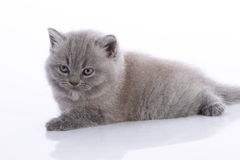Cute young kitten Stock Image