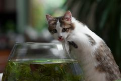 Cute young kitten and a fish bowl Stock Image