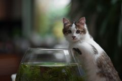 Cute young kitten and a fish bowl Stock Photography