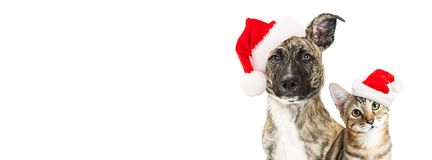 Christmas dog and cat website banner. Cute young mixed breed dog and kitten together wearing santa hats, looking into camera. Horizontal website banner with copy Royalty Free Stock Photography