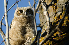 Cute Young Owlet Perched in a Tree Stock Photos