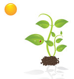Cute young plants Royalty Free Stock Photos
