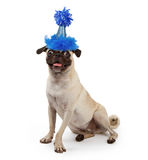 Cute Young Pug Dog Wearing a Party Hat Royalty Free Stock Photography