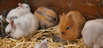 Cute Young Rabbits Stock Photography