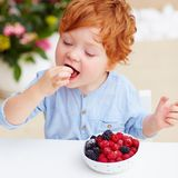 Young redhead toddler baby boy tasting the fresh and ripe raspberries and blackberries Stock Photos