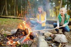 Cute young sisters roasting hotdogs on sticks at bonfire. Children having fun at camp fire. Camping with kids in fall forest. Family leisure with kids at royalty free stock photo