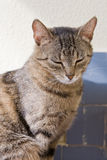 Cute young tabby cat relaxing. Stock Photo