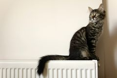 Cute young tabby cat sitting. On radiator royalty free stock images