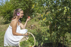 Cute young woman eating tomato Royalty Free Stock Photos