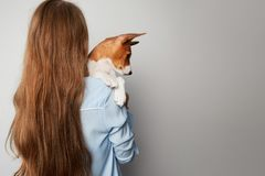 Cute young woman hugging and kissing her puppy basenji dog. Love between dog and owner. Isolated on white background.  royalty free stock photo