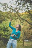 Cute young woman picking apples in an orchard stock images