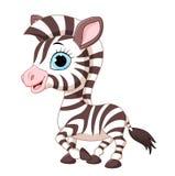 Cute zebra posing  on white background Royalty Free Stock Photography