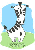 Cute Zebra. Stock Photos