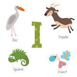 Cute zoo alphabet. Cute vector zoo alphabet. Funny cartoon animals: ibis, impala, iguana, insect Royalty Free Stock Photo
