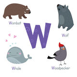 Cute zoo alphabet. Cute vector zoo alphabet. Funny cartoon animals: wombat, wolf, whale, woodpecker royalty free illustration