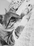 Cute Cat royalty free stock image