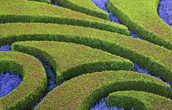 Cuted arbustos e flores Imagens de Stock