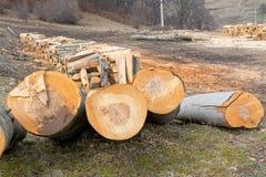 Cuted-Buchen-Baumstämme Stockbild