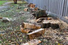 Cuted caido spruce Foto de archivo libre de regalías