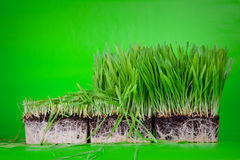Cuted grass Stock Images