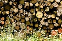 Cuted träd på lös skogbakgrund 50,6 Megapixels 6480 med 4320 PIXEL royaltyfri fotografi