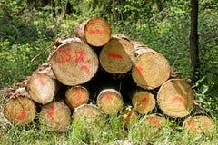 Cuted träd på lös skogbakgrund 50,6 Megapixels 6480 med 4320 PIXEL royaltyfria foton