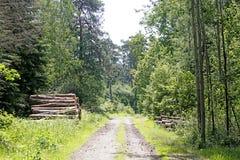 Cuted träd på lös skogbakgrund 50,6 Megapixels 6480 med 4320 PIXEL arkivbilder